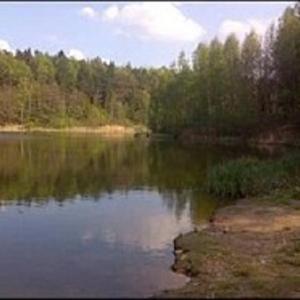 Waldstück an der Heidemühle